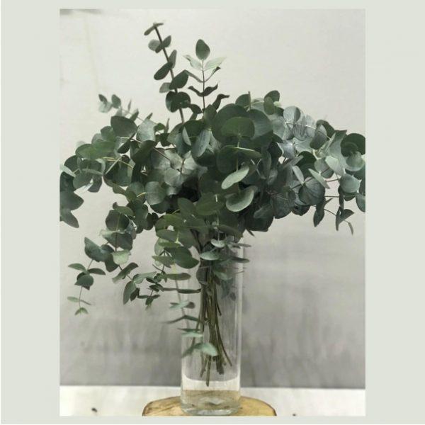 eucalipto para decorar los ramos que haces en tu casa