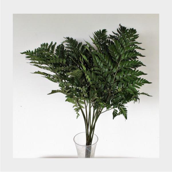 helecho cuero para poder emplear en tus ramos de flores originales
