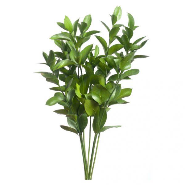 ruscus para hacer tu ramo de flores diy