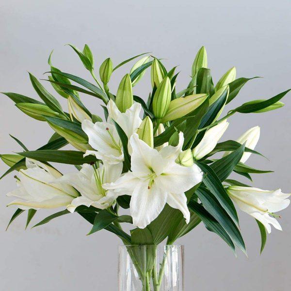 Oferta flores para comprar Lilium Oriental